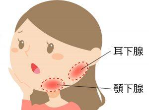 耳下腺と顎下腺